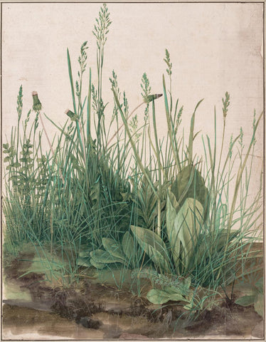 The Large Piece of Turf  1503 by Albrecht Durer
