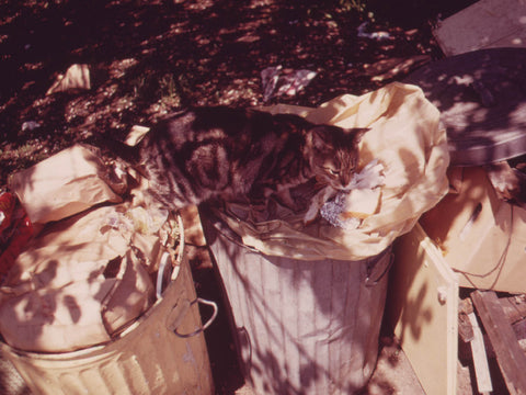 CAT IN GARBAGE CAN  - 547852