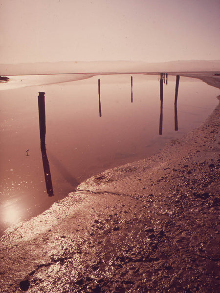 MUD FLATS, HUMBOLDT BAY AREA