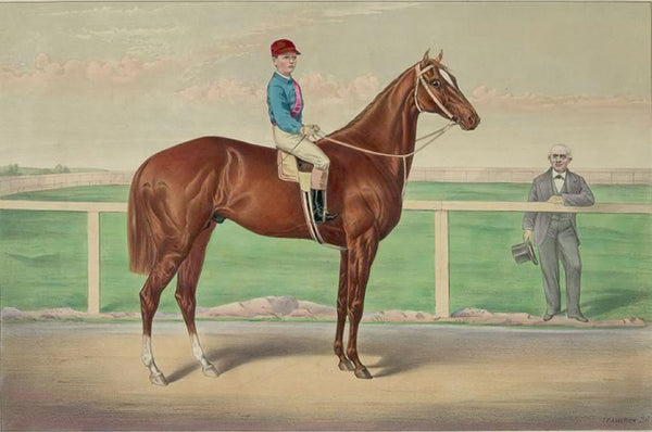 Ready for the signal: the celebrated running horse Harry Bassett by Lexington dam Canary Bird the property of Col. D. McDaniel's & Co. of Princeton N.J. (James Roe rider)
