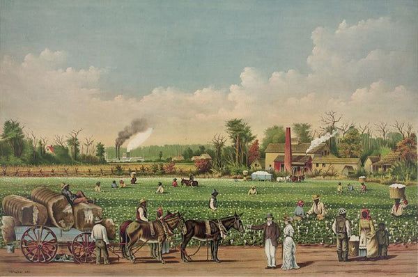 A cotton plantation on the Mississippi