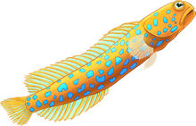 Load image into Gallery viewer, Glitter Goby