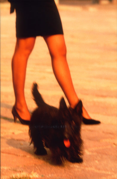 Girl's Legs, Dog in Foreground