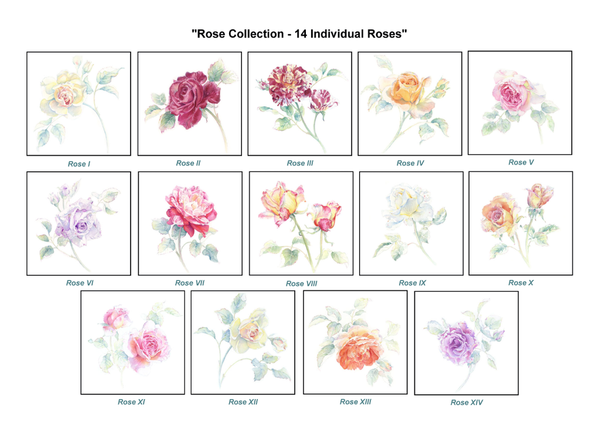 Rose Collection - Individual Roses