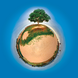 Lil' Planet - Tree of Carp Beach