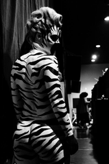 Zebra Back Stage