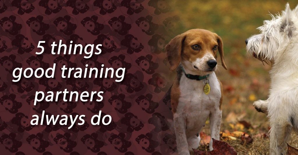 5 things good training partners always do