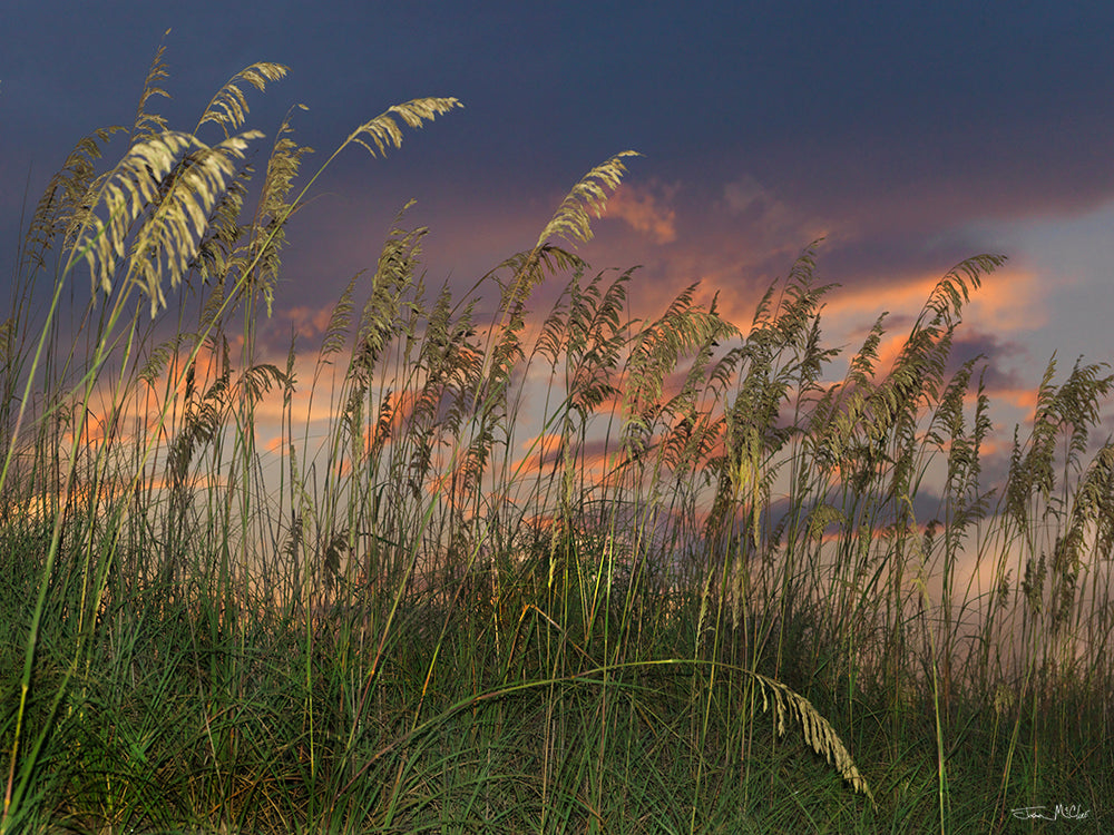sea oats on the beach, sand dunes photography, sand dunes canvas prints, sunset images, sunset photos, beach images