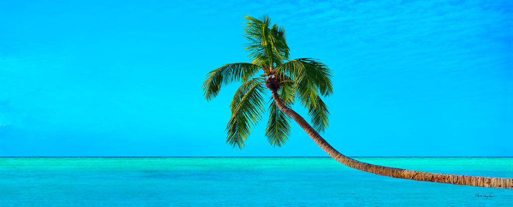 tropical photography panoramic palm tree lonely blue aqua turquoise