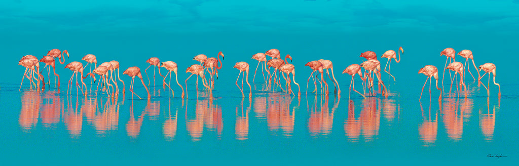 flamingo art photography prints wall canvas parade