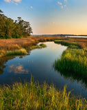 Golden Marshes Cape Fear