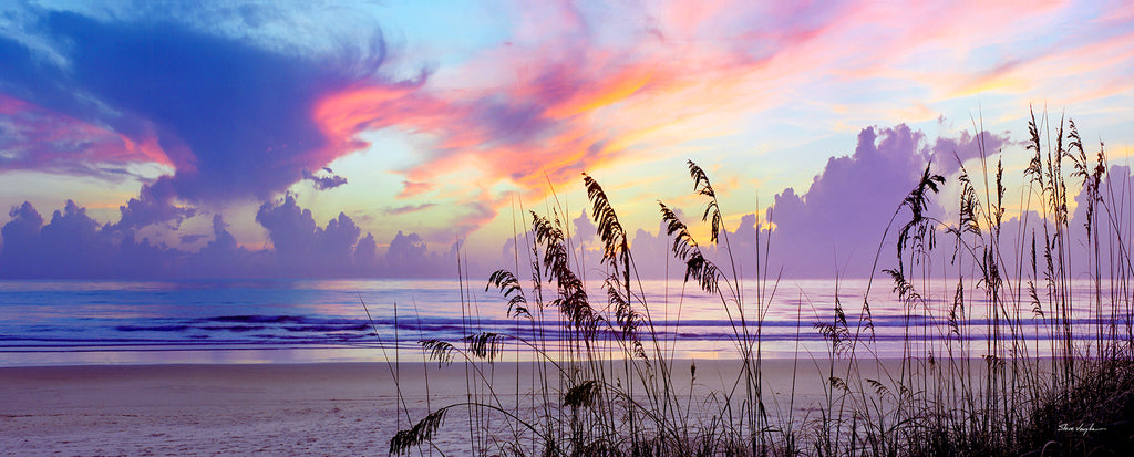 sea oats sunrise, panoramic photography, wall art, purple art