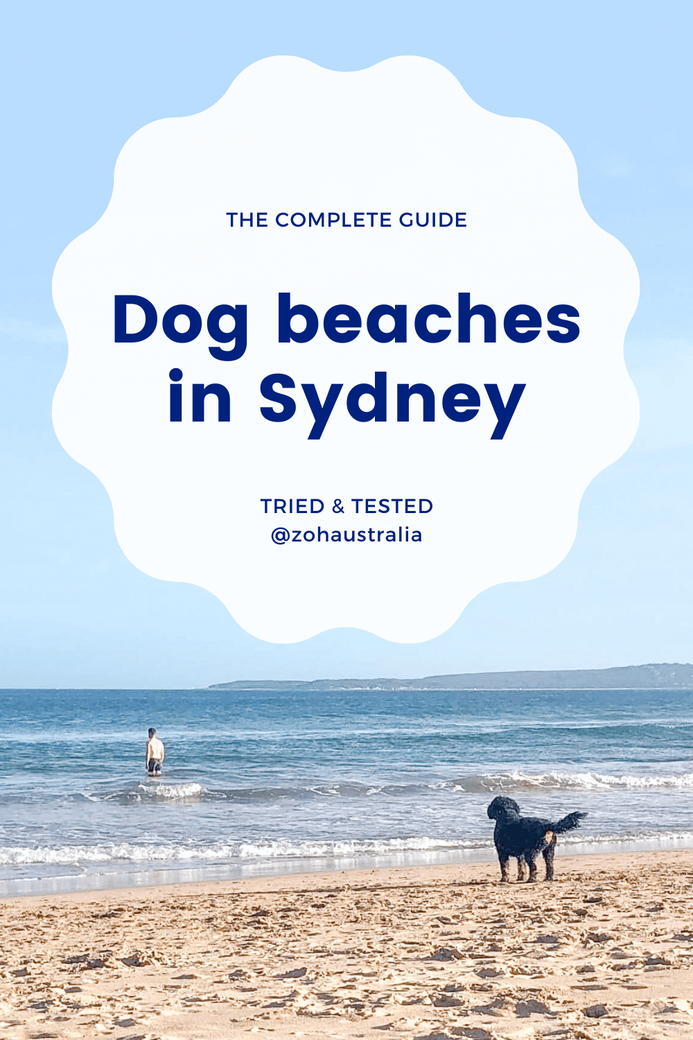 The Complete Guide: Dog Beaches in Sydney