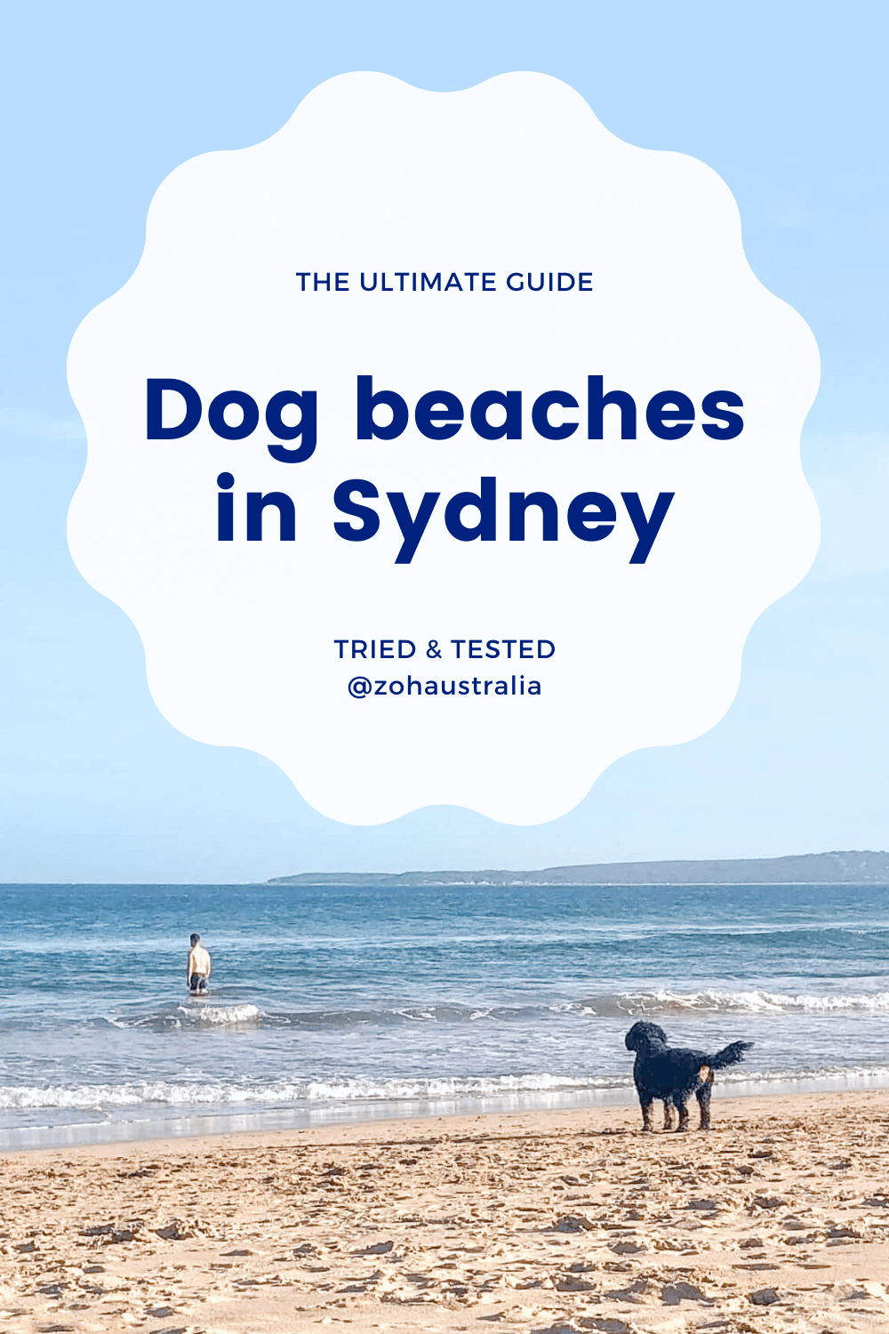 The Ultimate Guide: Dog Beaches in Sydney