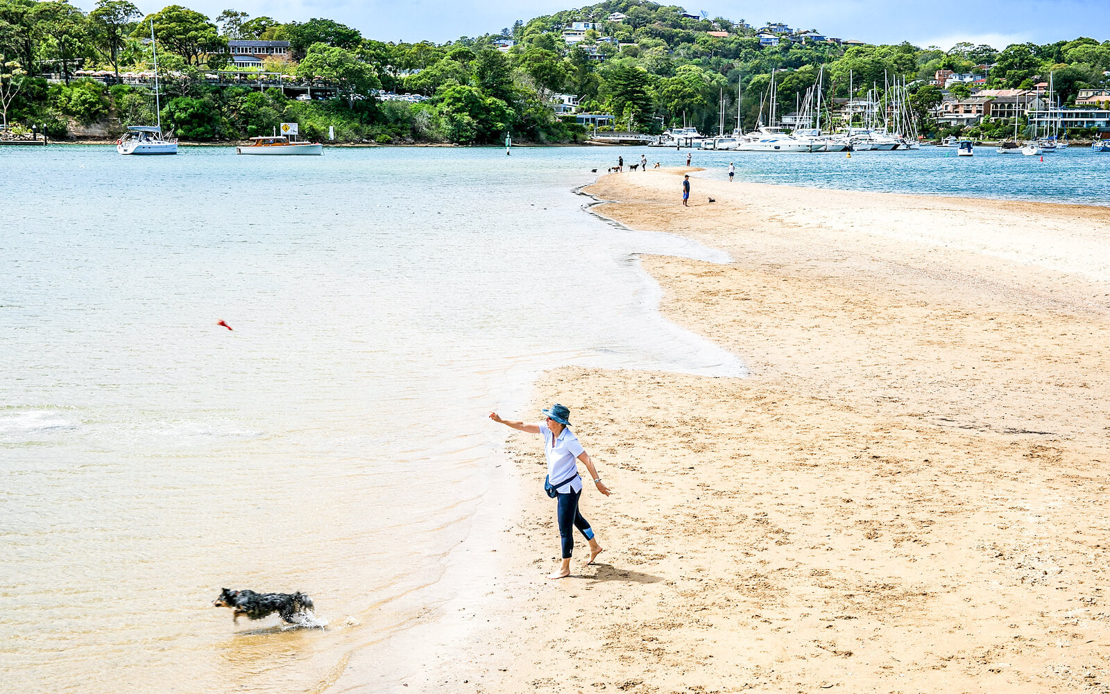 best dog beaches sydney rowland reserve bayview