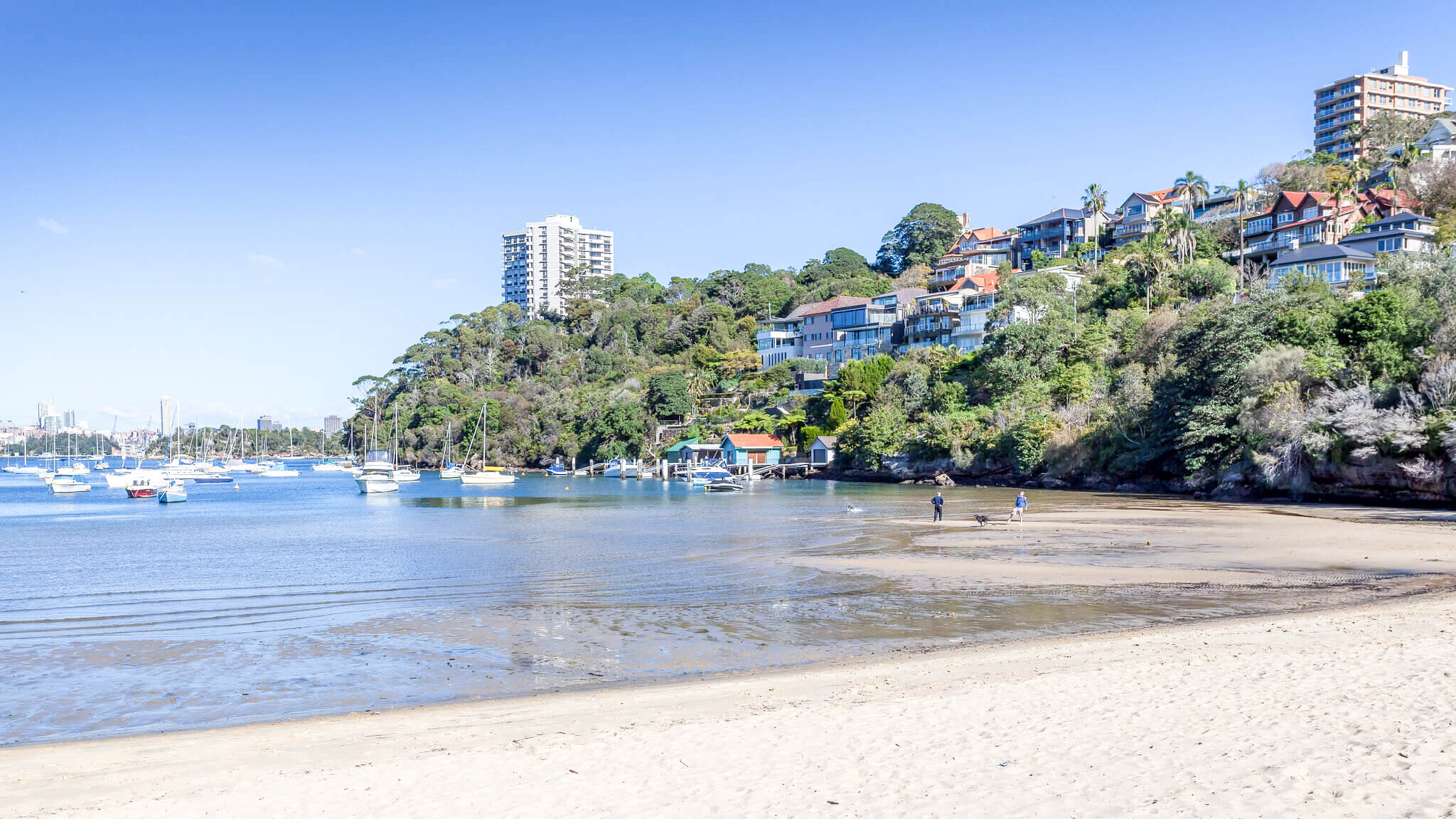 best dog beaches sydney sirius cove mosman 2