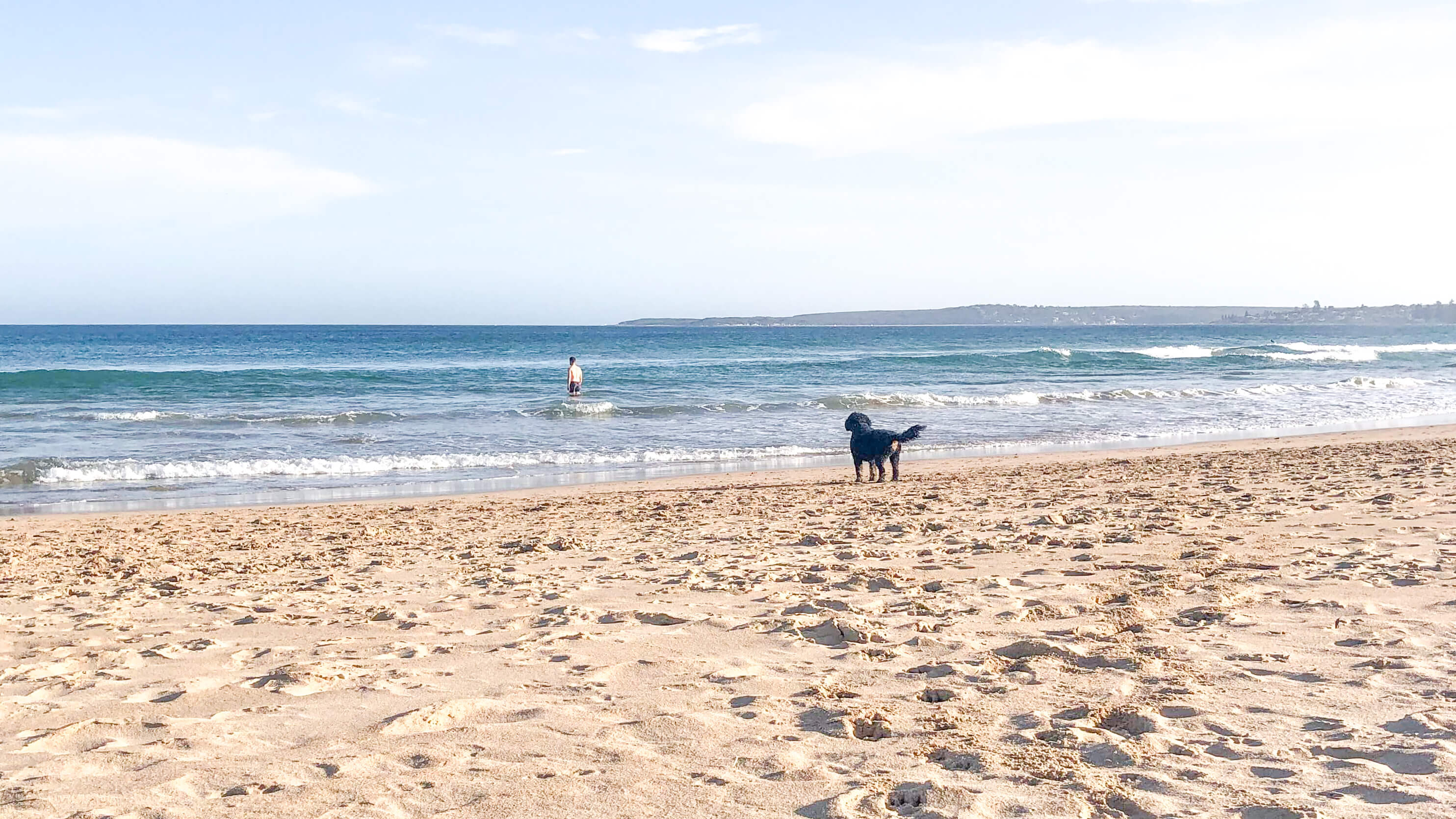 best dog beaches sydney greenhills 1