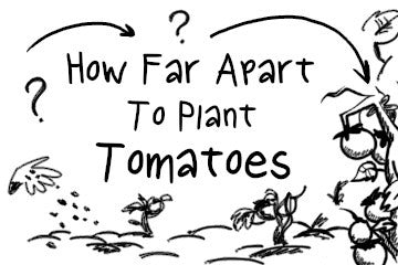 How Far Apart To Plant Tomatoes? The Quick Answer