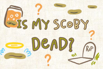 Is My SCOBY Dead? The Brewer's Quick Guide