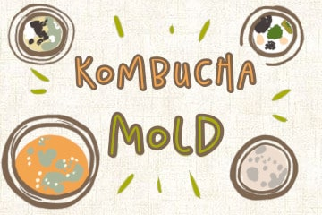 Kombucha Mold Guide: How To Identify And Destroy