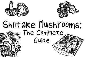 Shiitake Mushrooms: The Complete Guide
