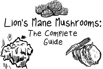 Lion's Mane Mushrooms: The Comprehensive Guide