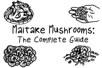 Maitake Mushrooms: The Complete Guide