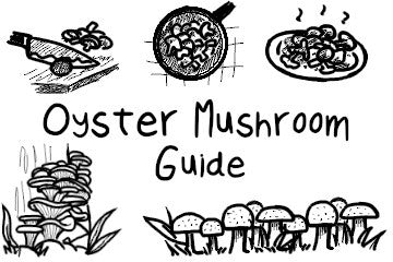 Oyster Mushrooms: The Definitive Guide