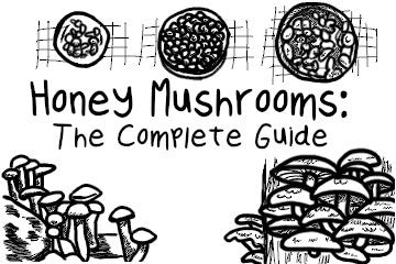 Honey Mushrooms: The Complete Guide