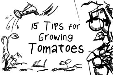 15 Tips For Growing Tomatoes Every Gardener Needs To Know