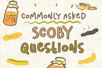 commonly_asked_SCOBY_questions