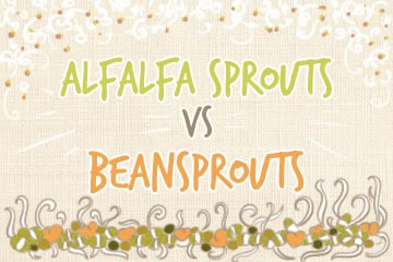 Bean Sprouts Vs Alfalfa Sprouts | A Complete Comparison