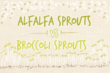 Broccoli Sprouts Vs Alfalfa Sprouts: The Comparisons