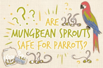 Are Mung Bean Sprouts Safe For Parrots? | A Quick Guide