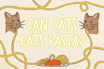 Can Cats Eat Pasta? A Feline's Guide