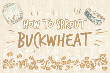 How To Sprout Buckwheat: A Comprehensive Guide