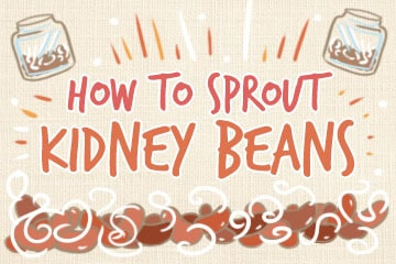 How To Sprout Kidney Beans: The Comprehensive Guide