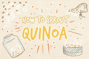 Sprouting Quinoa: The Definitive Guide