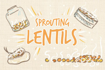 Sprouting Lentils: The Complete Guide For Growers