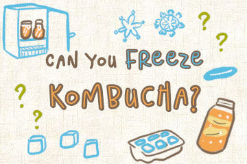 can_you_freeze_kombucha_illustrations