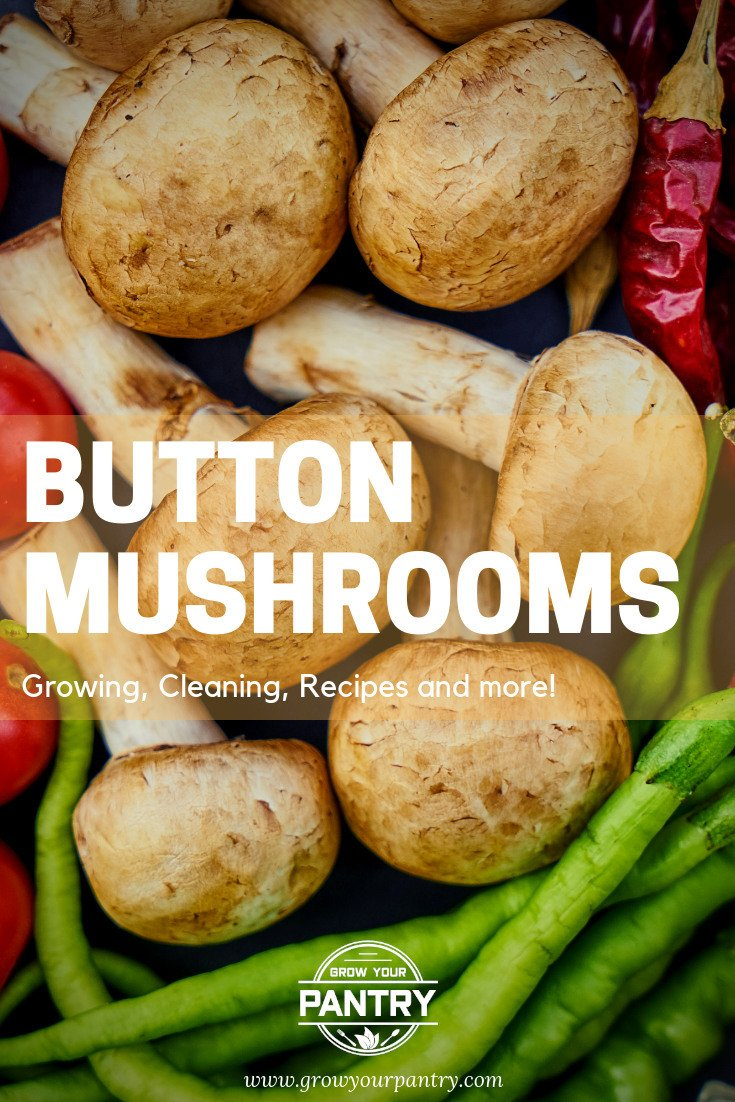 button_mushroom_guide_infographic