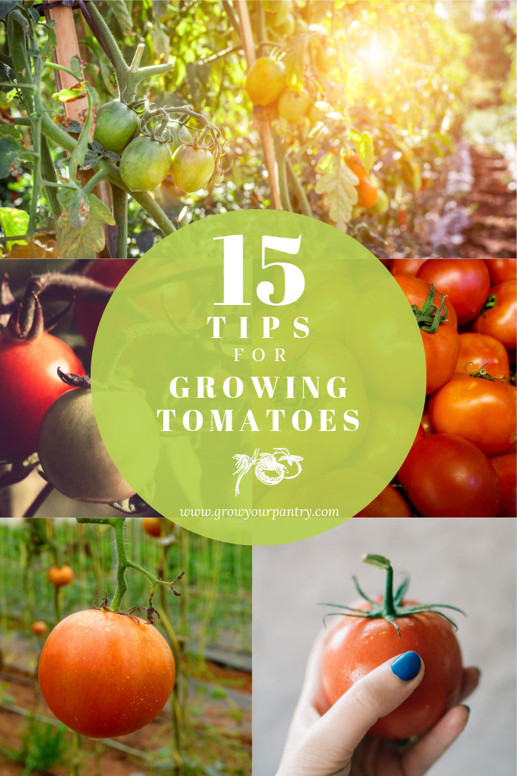 15_tips_for_growing_tomatoes_infographic