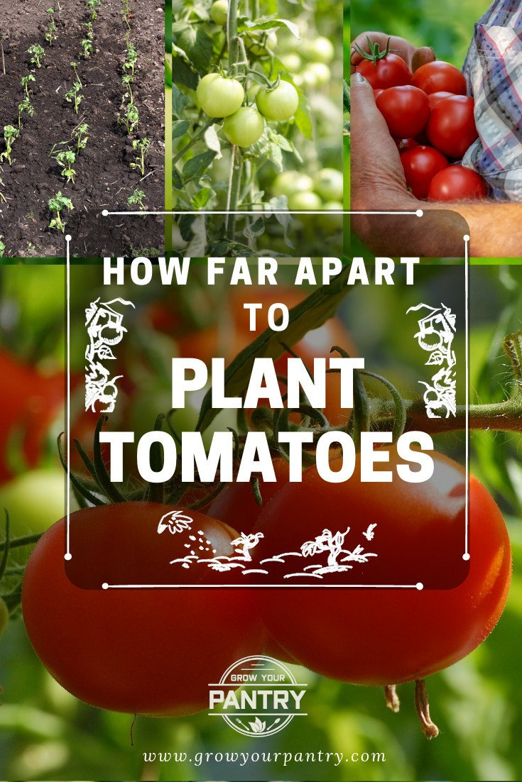 how_far_apart_to_plant_tomatoes_illustrations