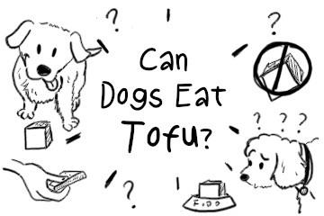 can_dogs_eat_tofu_illustration