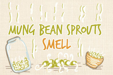 mung_bean_sprout_smell_infographic