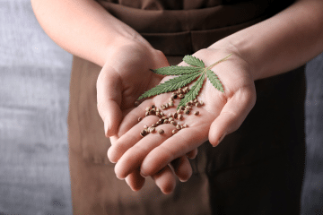 holding_hemp_seeds