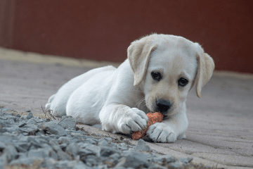 puppy_eating_treats