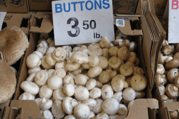 button_mushrooms_for_sale