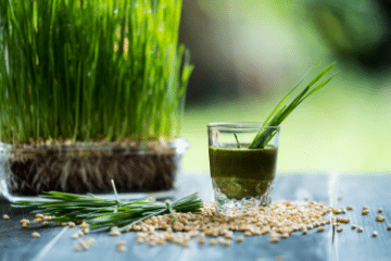 wheatgrass_growing_in_soil
