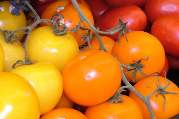 ripe_tomatoes_orange_yellow_red